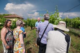 vineyard , TAKUYA T - June 2015