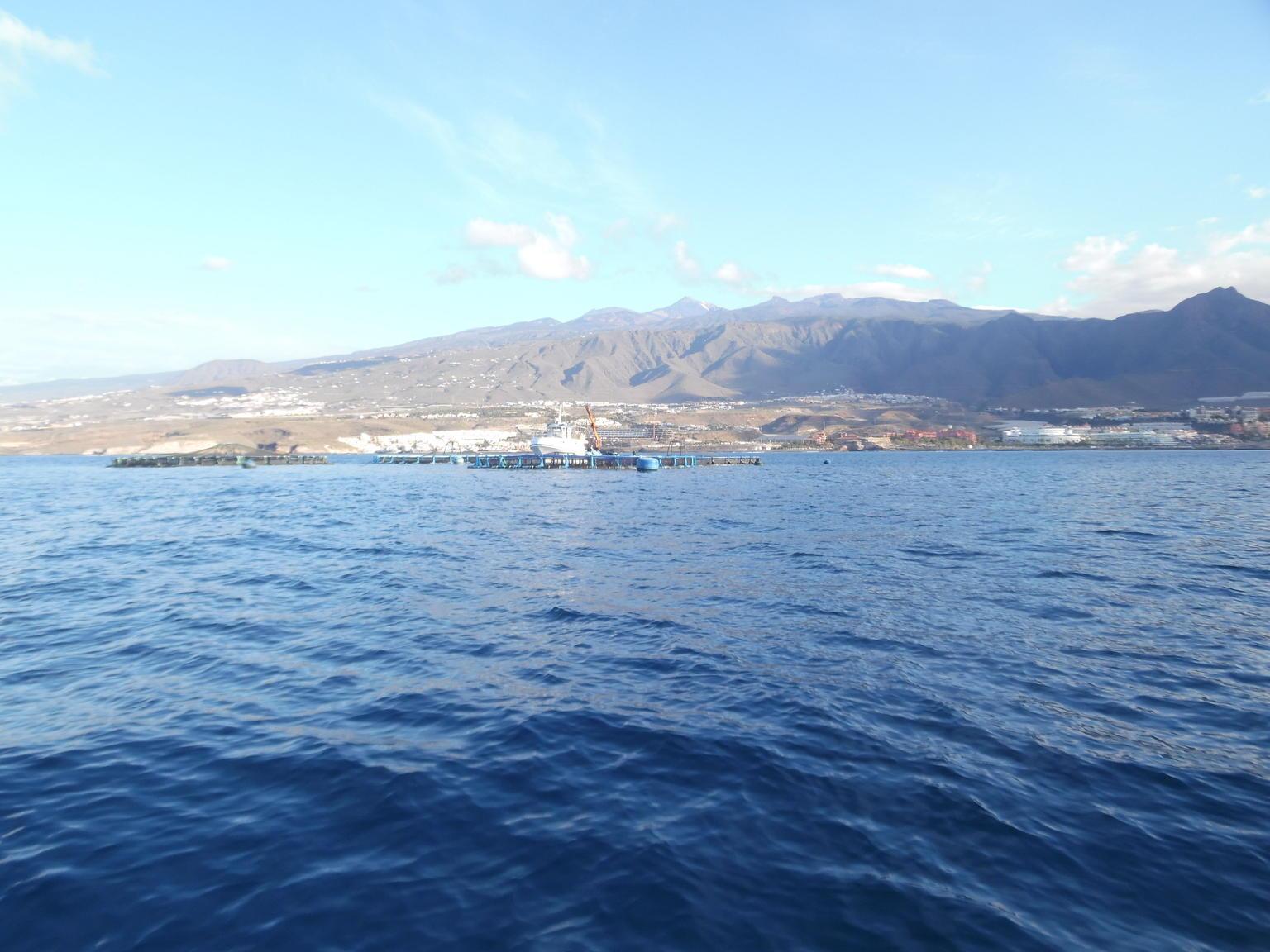 MÁS FOTOS, Velero de avistamiento de ballenas y delfines con bebidas, aperitivos y tiempo para nadar
