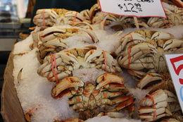 Crabs , john w - July 2015