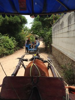 Carriage ride, Janine S - May 2015