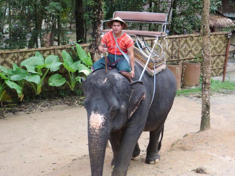Our elephant! - Phuket
