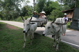 Me and my family on the ox cart, we think the hats rather suit us! , Rodney H - June 2011