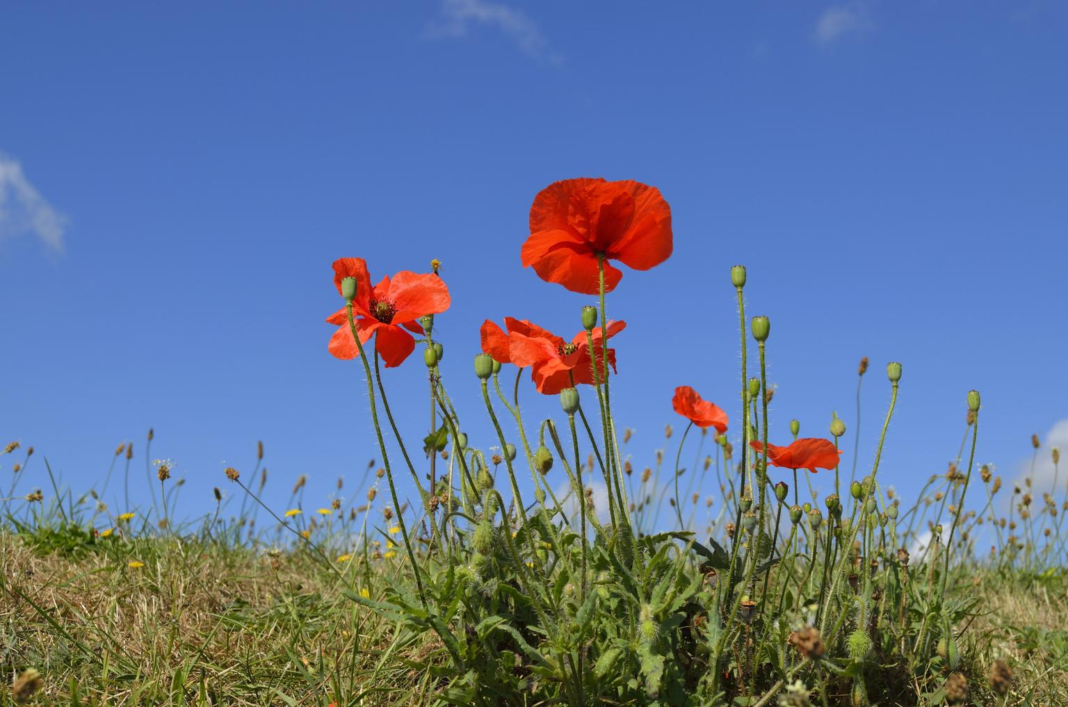 MÁS FOTOS, Remembrance tour from Bruges. The city Bruges & the poppies of Flanders Fields