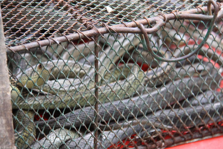 Snakes in a Cage!!! - Hong Kong