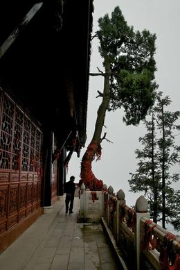 Tree in the Clouds on Qingcheng Mountain , Deana J - November 2013