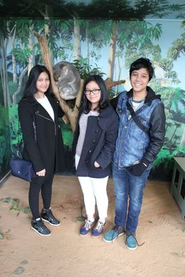 Take a snap with the sleepy koala at Wildlife Encounter At Maru Koala , Devi S - October 2015