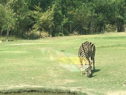 Views of some of the animals. , Scott S - August 2017