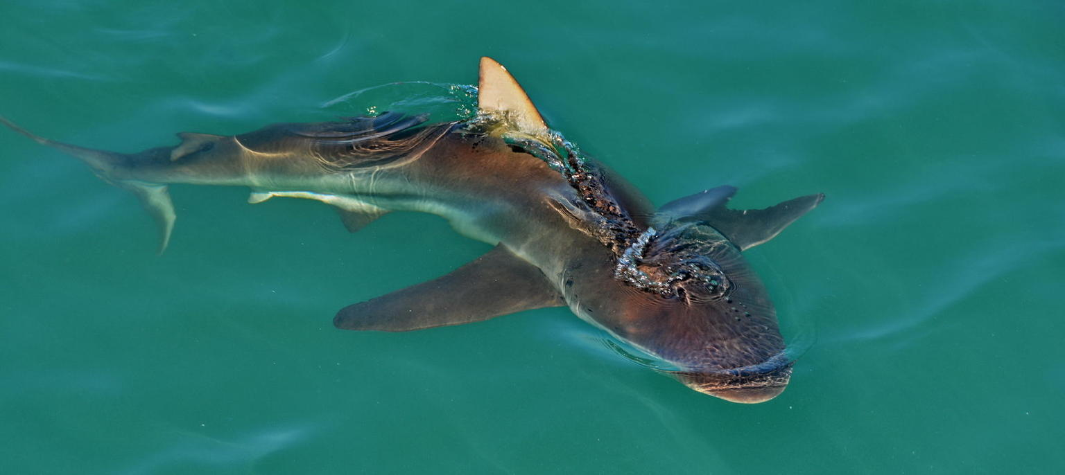 MORE PHOTOS, Shark Cage Diving and Viewing from Cape Town