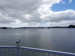 Our view after the coach dropped us off in Paihia , Gillian C - March 2015