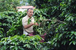 Marío Enseñando como se cultiva el Café. , clements3rd - August 2015