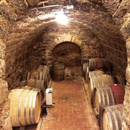 wine cellar , JIHYE K - April 2016
