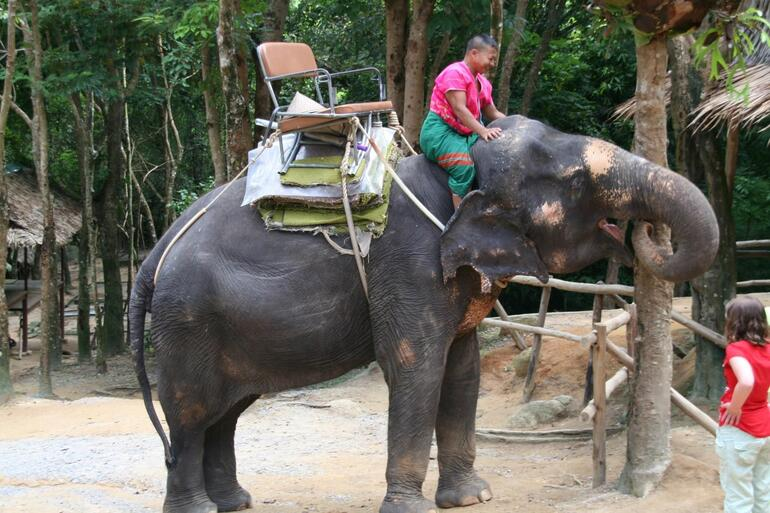 The Elephants Arrive - Phuket