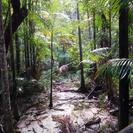 Excursión de 2 días a la isla Fraser en vehículo 4X4 desde Brisbane o Gold Coast, Surfers Paradise, AUSTRALIA