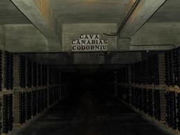 Codorniu cava cellar , Allison N - September 2012