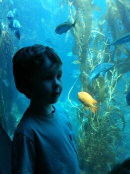 Emmett at the aquarium. , Skootre - April 2011