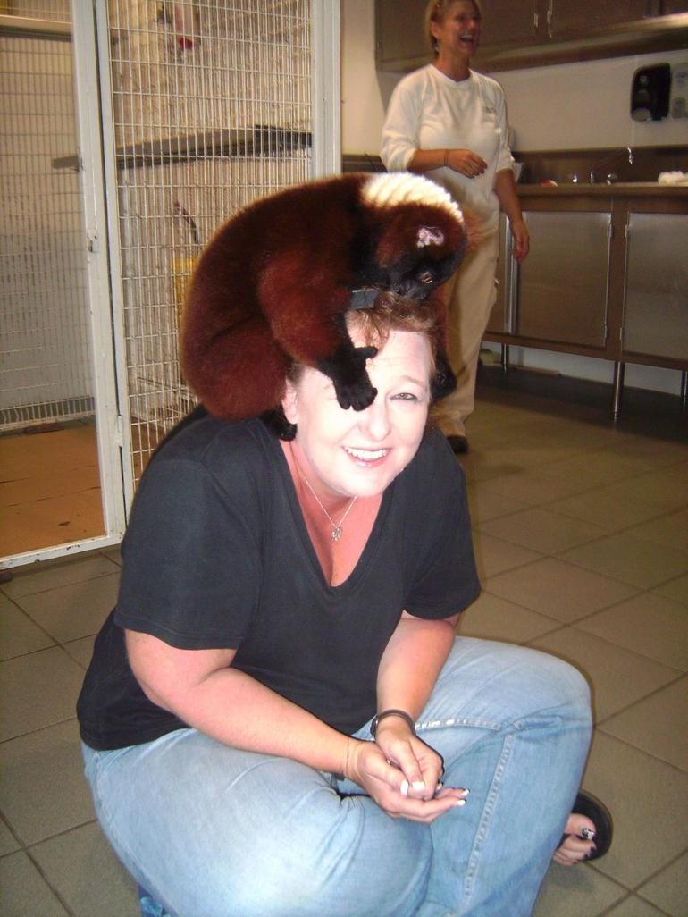 Lemur changing my hair-do! - Miami