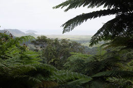 Photo taken on the perimeter of the Daintree rain forest looking towards the ocean. , Brian W - August 2016