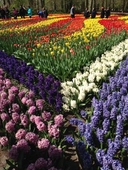 April 2015 Keukenhof Gardens , Rosemary G - May 2015