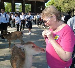 Nara Deer Park , Bill M - June 2017