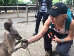 Feeding snacks to the kangaroos , Brazzie - June 2016