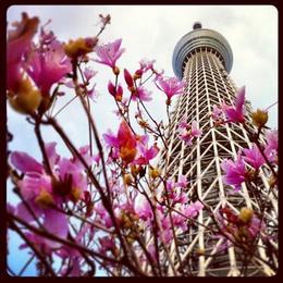 Tokyo Skytree, Asha & Brock - July 2013