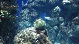 Aquarium Reefs, Josh - February 2015