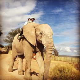 I got to ride an elephant, best experience ever! , tiffanynoraj - March 2015
