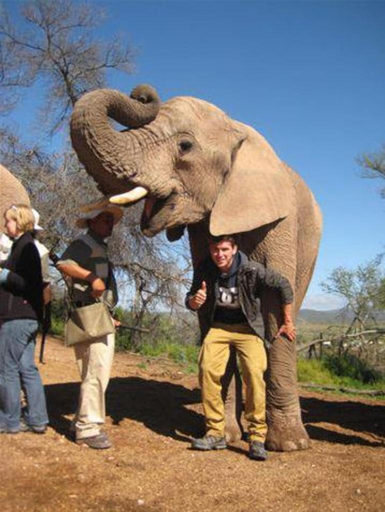 elephant5 (3).jpg - Cape Town