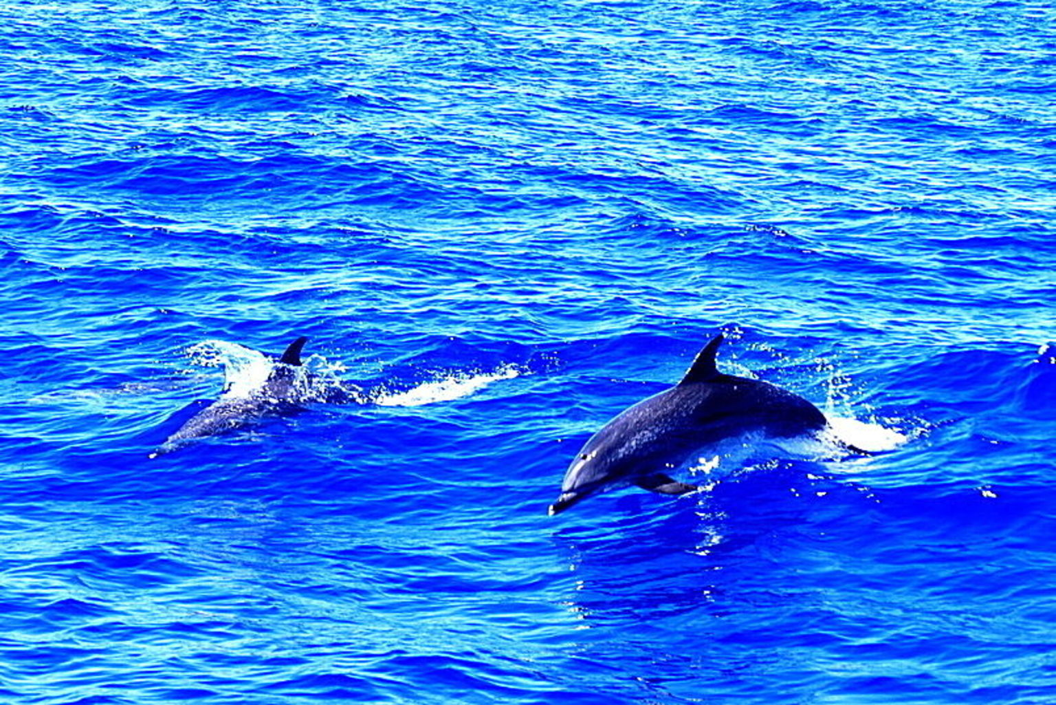 MORE PHOTOS, Madeira Dolphin and Whale Watching on a Luxurious Catamaran