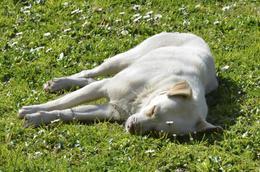 Ces chiens sont nourris, vaccinés, stérilisés et adorent le soleil! , Yvon D - April 2013