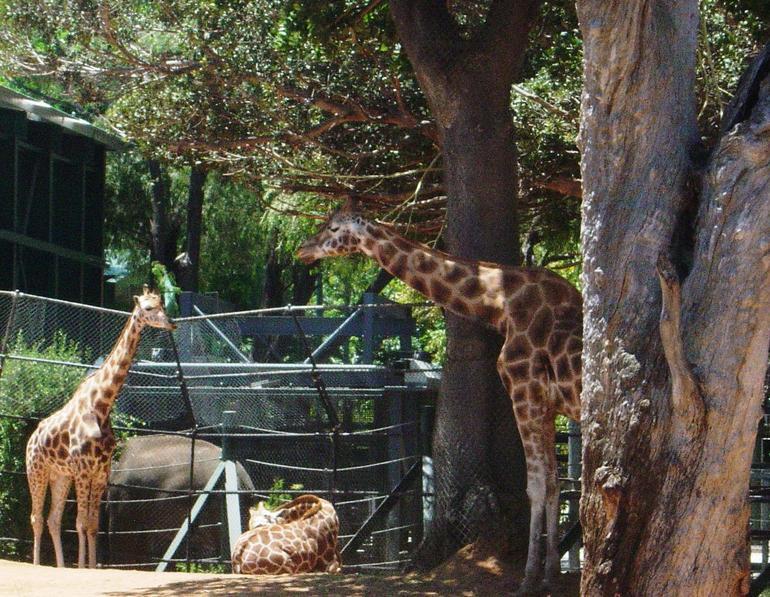 Perth Zoo - Perth