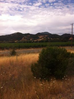 Beautiful Napa Valley, Kierra - August 2014