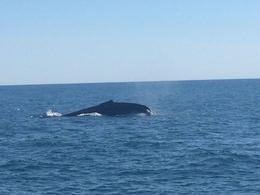 As baleias ficam bem próximas e caso você não veja nenhuma, pode refazer o passeio sem custo. , ani_luccas - August 2016