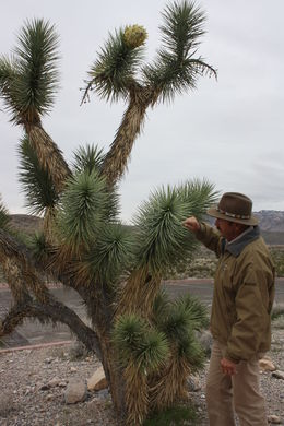 Joshua Trees, Amanda H - March 2015