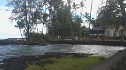 Turtles graze at the rock face of this lava beach. , Fiona M - September 2013