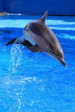 Dolphin show in Hong Kong Ocean Park, Bing - July 2012