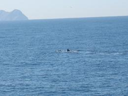 Whale seen during the cruise in San Diego Bay, Gabriele E - February 2008