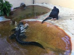 Alligator wrestling! , Allison O - December 2016