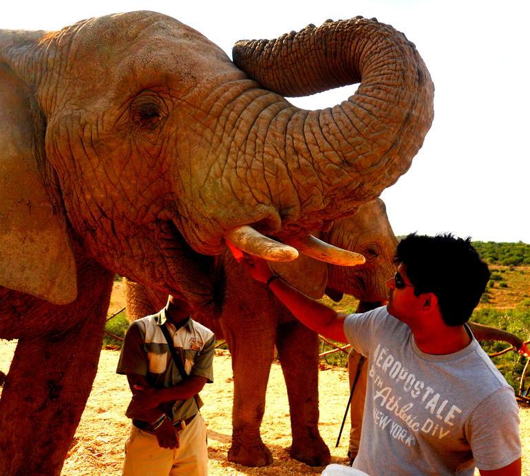 Elephant Feeding Time - Cape Town