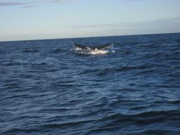 Sydney, Australia. Humpback Whale Tail., Michael O - June 2008