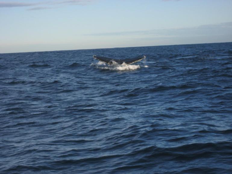 Humpback Tail - Sydney