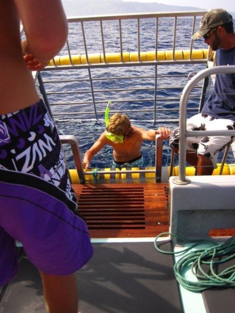Shark Dive! - Oahu