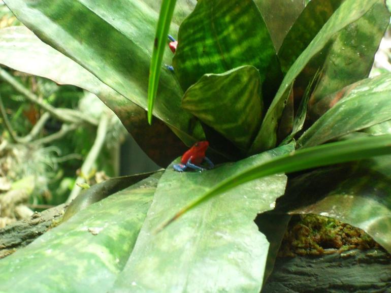 Tiny Frogs - San Francisco