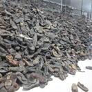 Excursión para grupos a Auschwitz-Birkenau desde Cracovia, Cracovia, POLONIA