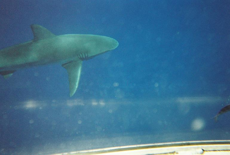 requin-nage-aventure-oahu