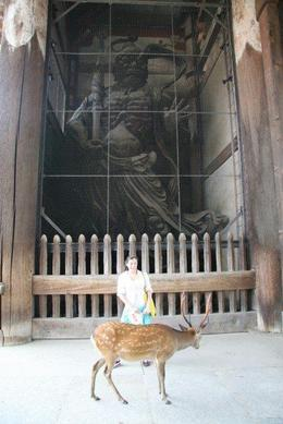 Todaiji temple, Nara, Cat - December 2011