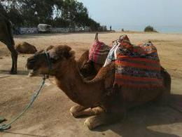 Camel ride , 1viaje - November 2016