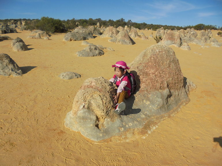 Pinnacles Desert, Koalas, and Sandboarding 4WD Day Tour from Perth photo 11