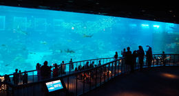 The impressive large viewing panel at the S.E.A. Aquarium. , Bill604 - November 2015