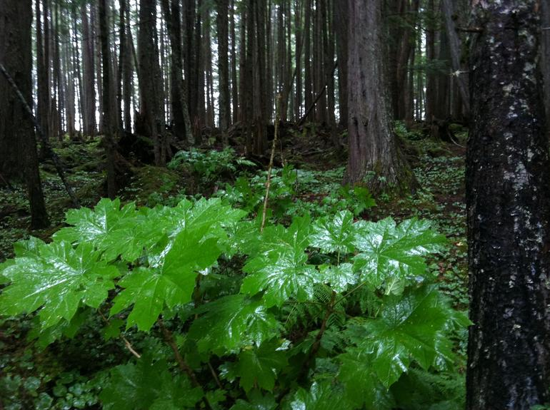 Some of the plant life in the Alaskan rain forest - Alaska